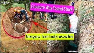 When This Creature Was Found Stuck in a Ditch, an Emergency Response Team Were Called In