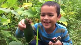 Our Little Boy Daniel Harvesting Garden Fresh Vegetables