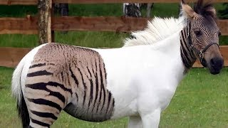 18 Most Shocking Real Mutations In Animals