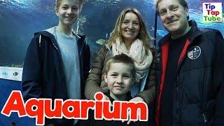 Wir sind im RIESEN HAI Aquarium ! VLog TipTapTube