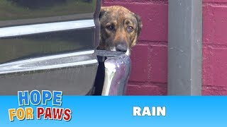Homeless German Shepherd cries like a human!  I have never heard anything like this!!!