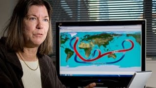 """Professor Judith Curry Quits over Climate """"Craziness"""""""