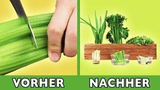 Frisches Essen aus Küchenabfällen: So sprießt das Grün immer wieder.