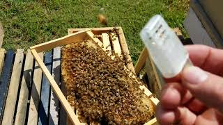 How the bees act when they reject the queen new beekeepers don