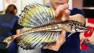 Japanese Street Food - DRAGON FISH SASHIMI Sailfin Poacher Japan Seafood