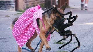 Giant Robot Spider Scares Dogs - 4K - (Reality Pranks 4K S2 E1)