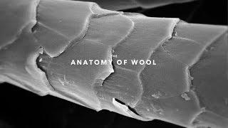 The Anatomy of Wool   TMI #3