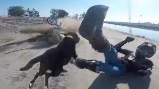 Animals Vs Bikers 2018 [Ep.#12] Woof Woof! Meow Meow! Mooooo!