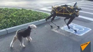Real Dog Meets Boston Dynamics Robot Dog for First Time