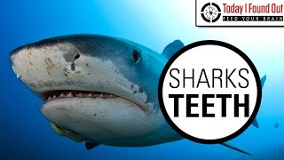 Can Sharks Really Grow an Unlimited Number of Teeth