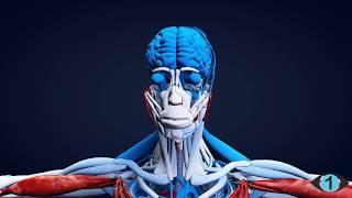 UNFASSBAR - Wozu euer Körper in der Lage ist!