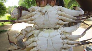 Cooking Sea Crab in My Village   Prepare My Wife   VILLAGE FOOD