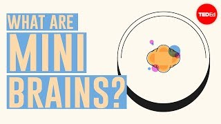 What are mini brains? - Madeline Lancaster