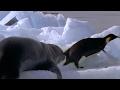 Leopard Seal Kills Emperor Penguin | Blu...mp3