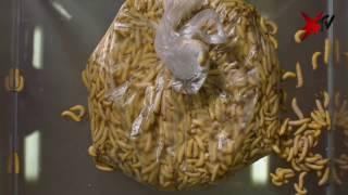 Larven fressen Plastiktüte - Zeitraffer | stern TV