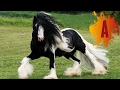 10 Most Beautiful Horse Breeds In The Wo...mp3