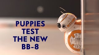 Puppies Test The New Star Wars BB-8 Droid Toy