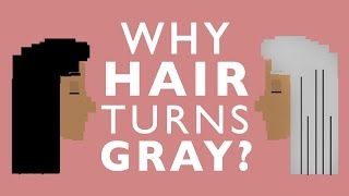 Why Your Hair Will Turn Gray