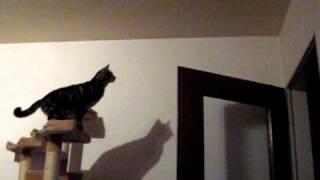 Katze springt auf die Tür
