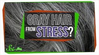 Will Stress Really Make You Go Gray?