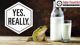 That Time People Put Frogs in Unrefrigerated Milk to Keep it From Spoiling