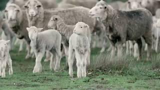 Introducing BrooksTech™ Merino Wool