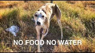 She was abandoned with no food or water ... AMAZING HAPPY END!