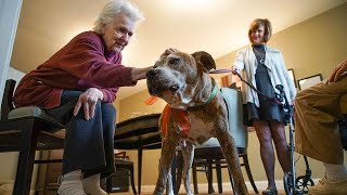 Rescue dog Rusty finds home in retirement community