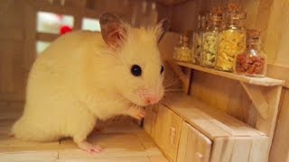 Tiny Hamster in his Tiny Kitchen