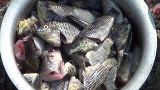 Village Style Cooking of Fish Recipes   FISH Catching Cleaning & Cooking In My Village   STREET FOOD