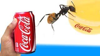 Experiment - Was passiert wen man Ameisen Coca Cola zu trinken gibt?