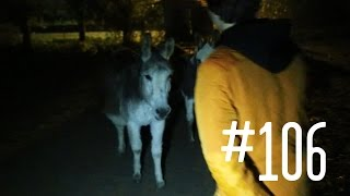 #106: Ezel ontvoeren [OPDRACHT]