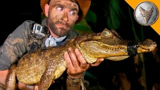 DANGEROUS Caiman Catch!