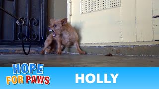 Rescuing a terrified abandoned dog - The transformation will amaze you! Please share.