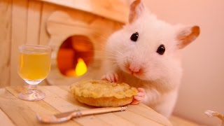 🐹 Hamster eats a pumpkin pie 🎃