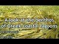 """A look at the Benthos of Greek Coastal ...mp3"