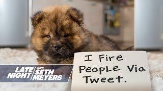 Extreme Dog Shaming: Firing People Via Tweet, Biting Beyoncé