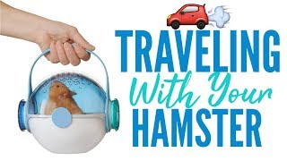TRAVELING WITH YOUR HAMSTER