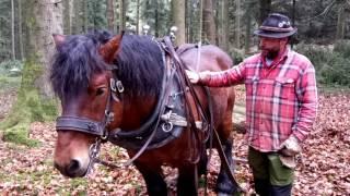 Im Auftrag des Bischofs: Pferderücker erklärt seine Arbeit