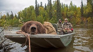Alaskan brown bear hunt in the fall: Conservation Explained