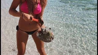 HOW TO CATCH, CLEAN & COOK LOBSTER and CONCH in the BAHAMAS!