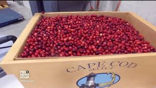 Why cranberries might be more trouble than they're worth for local growers