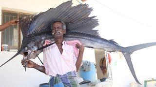 BIG KOLA FISH Prepared by my Daddy / Village food factory