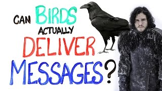 Can Birds Actually Deliver Messages?