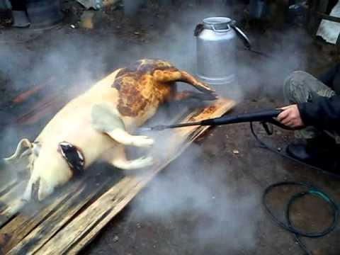 Как разделать свиную тушу в домашних условиях видео