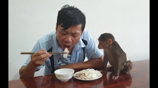 Baby Monkey   Doo Also Wants To Eat His Daddy