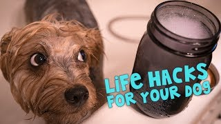 11 Awesome Life Hacks For Your Dog