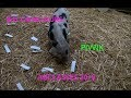 Jeu Concours dec 18 PIWIK THE PIG
