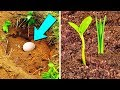 Put An Egg In Your Garden And See What W...
